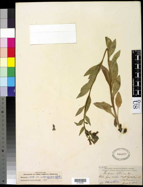 http://collections.mnh.si.edu/search/botany/?irn=10589559