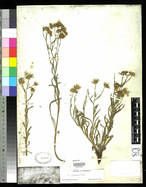 http://collections.mnh.si.edu/services/media.php?env=botany&irn=10215502