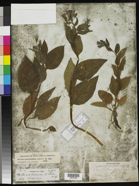http://collections.mnh.si.edu/search/botany/?irn=2148223