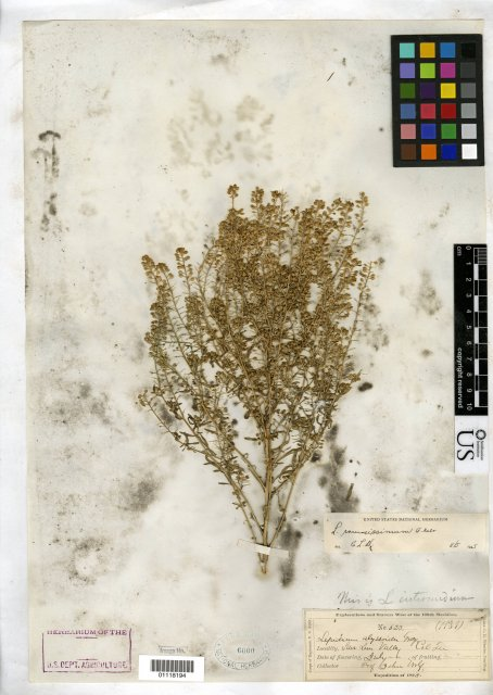 http://collections.mnh.si.edu/search/botany/?irn=10380107