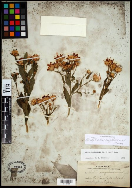 http://collections.mnh.si.edu/search/botany/?irn=10792627