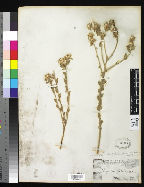 http://collections.mnh.si.edu/search/botany/?irn=10145666
