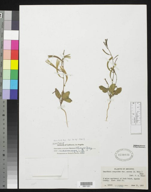 http://collections.mnh.si.edu/services/media.php?env=botany&irn=10135918