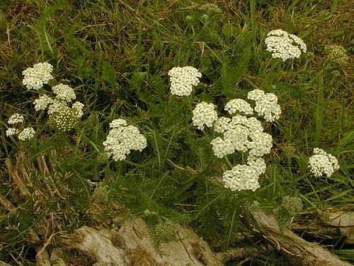 http://www.bioimages.org.uk/vfg/MWSt/Nikon950/2001/01-08/01-08-25/01H25E+8.jpg