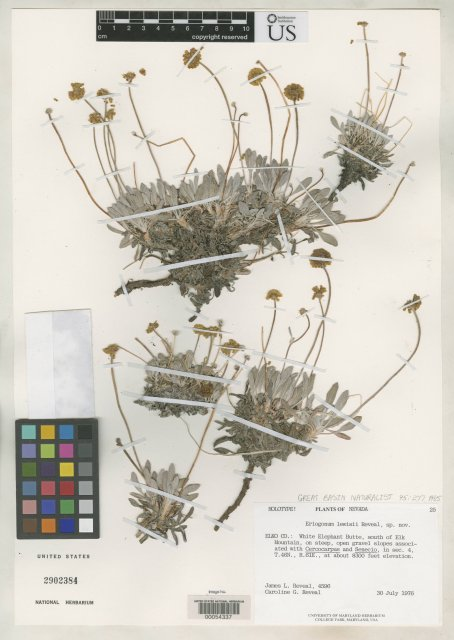 http://collections.mnh.si.edu/search/botany/?irn=2075998
