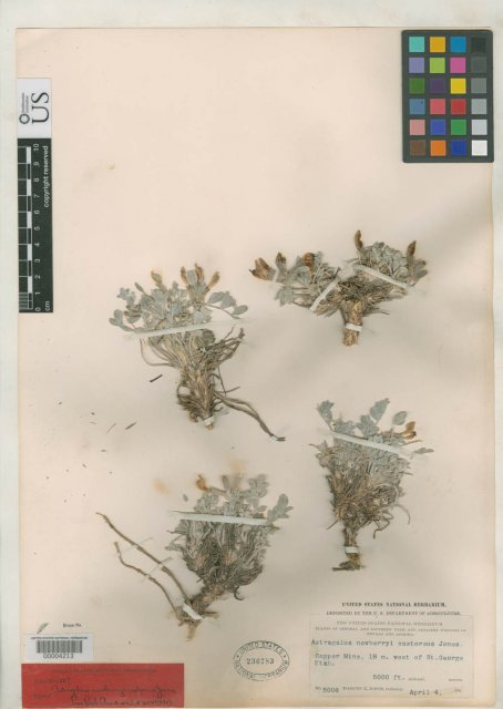 http://collections.mnh.si.edu/search/botany/?irn=2109133