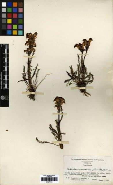 http://elmer.rbge.org.uk/bgbase/vherb/bgbasevherb.php?cfg=bgbase/vherb/bgbasevherb.cfg&specimens_barcode=E00279313