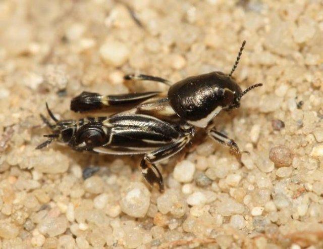 http://www.biolib.cz/en/image/id88194/