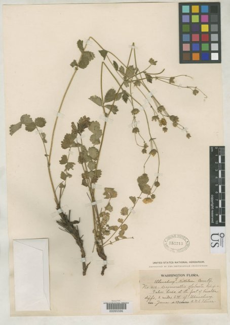 http://collections.mnh.si.edu/search/botany/?irn=2138448