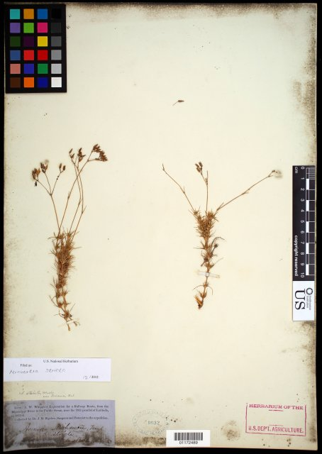 http://collections.mnh.si.edu/search/botany/?irn=10785927