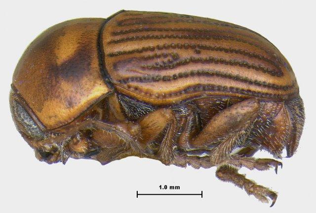 http://camptosomata.lifedesks.org/node/632