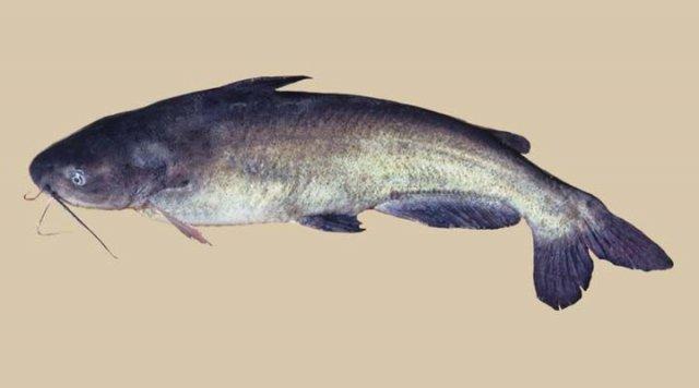 http://www.fishwisepro.com/pics/jpg/025018F000112W000003.jpg