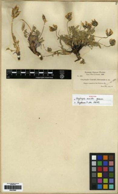 http://elmer.rbge.org.uk/bgbase/vherb/bgbasevherb.php?cfg=bgbase/vherb/bgbasevherb.cfg&specimens_barcode=E00279992