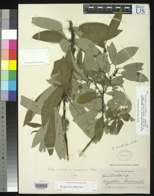 http://collections.mnh.si.edu/services/media.php?env=botany&irn=10050609
