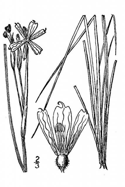 http://plants.usda.gov/java/largeImage?imageID=sist4_001_avd.tif