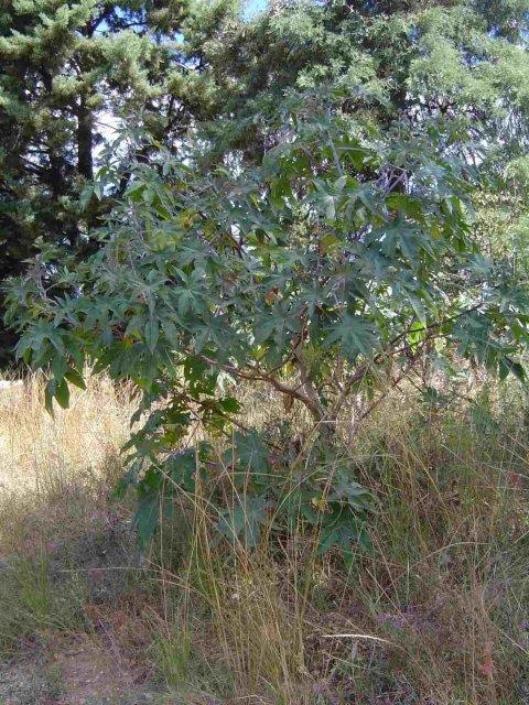 http://www.zimbabweflora.co.zw/speciesdata/images/13/135350-1.jpg
