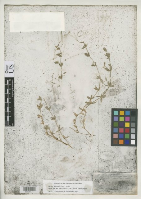 http://collections.mnh.si.edu/search/botany/?irn=2167982
