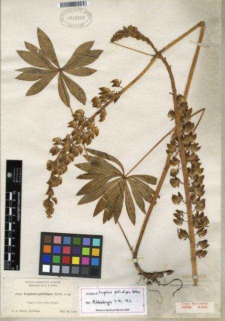 http://www.tropicos.org/Image/10427