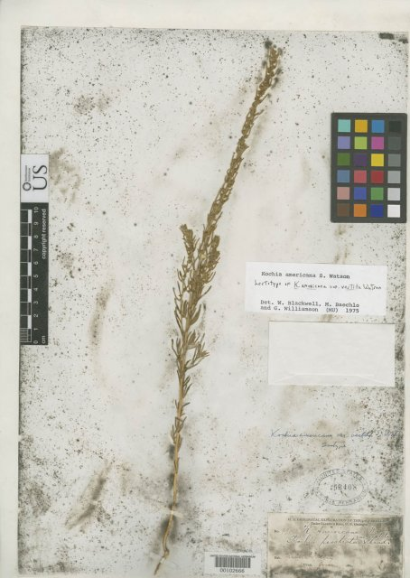 http://collections.mnh.si.edu/search/botany/?irn=2167323