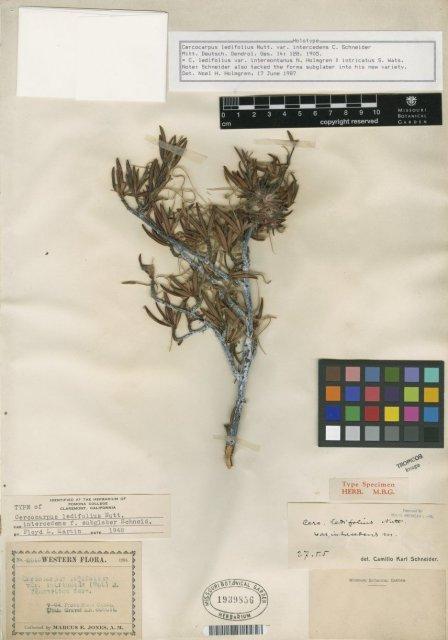 http://www.tropicos.org/Image/68642