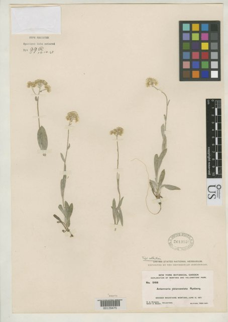 http://collections.mnh.si.edu/search/botany/?irn=2139957