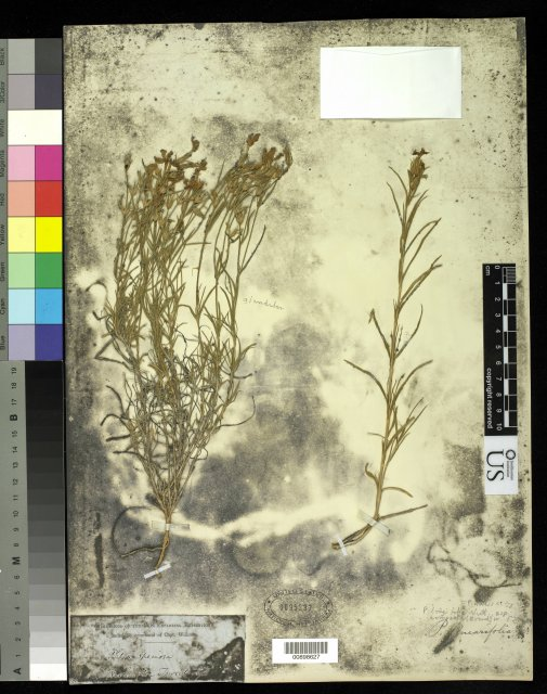 http://collections.mnh.si.edu/services/media.php?env=botany&irn=10215194