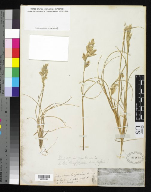http://collections.mnh.si.edu/services/media.php?env=botany&irn=10212524
