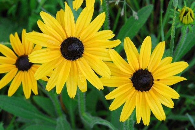 http://calphotos.berkeley.edu/imgs/512x768/0000_0000/0708/1532.jpeg