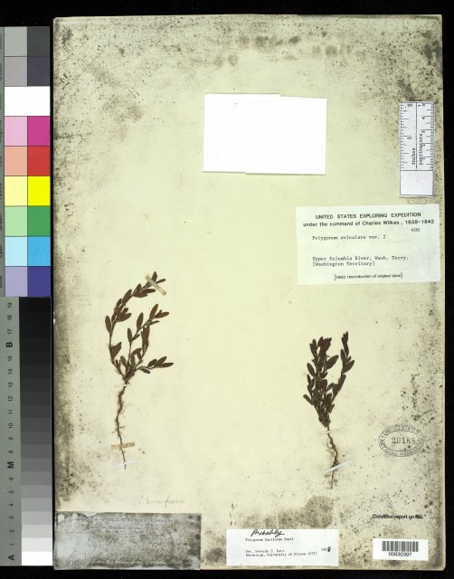 http://collections.mnh.si.edu/services/media.php?env=botany&irn=10212839