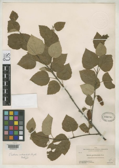 http://collections.mnh.si.edu/search/botany/?irn=2082292
