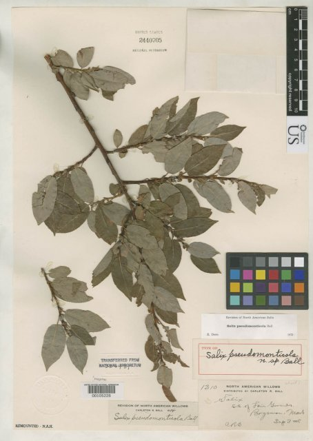 http://collections.mnh.si.edu/search/botany/?irn=2088724
