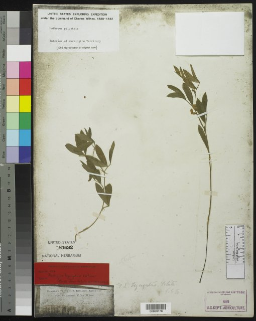 http://collections.mnh.si.edu/search/botany/?irn=10059716