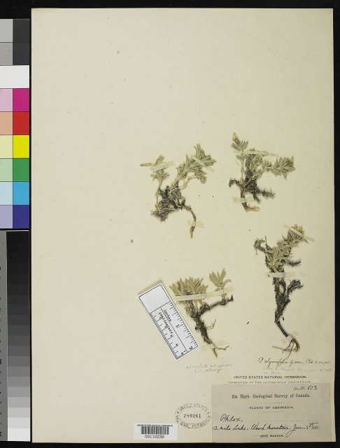 http://collections.mnh.si.edu/services/media.php?env=botany&irn=10119657