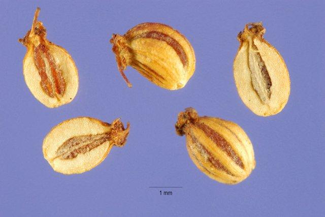 http://plants.usda.gov/gallery/large/cima2_005_lhp.jpg