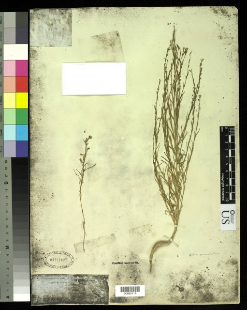 http://collections.mnh.si.edu/search/botany/?irn=10062192