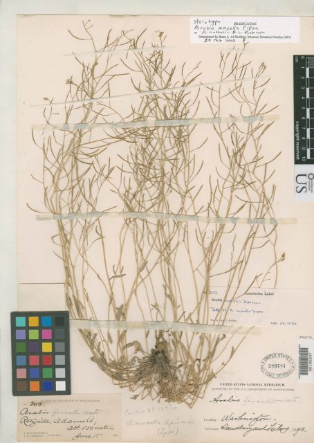 http://collections.mnh.si.edu/services/media.php?env=botany&irn=10101417