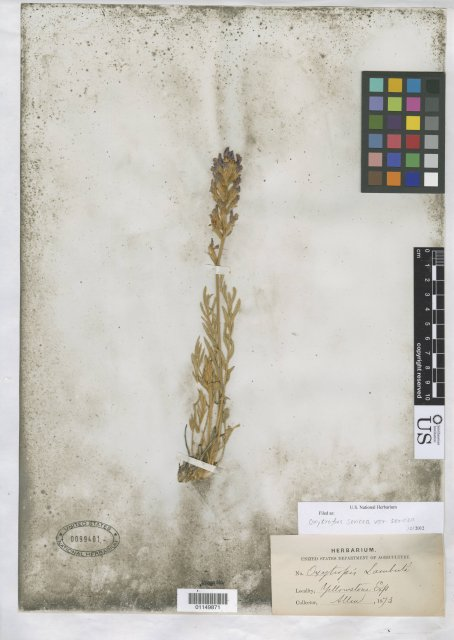 http://collections.mnh.si.edu/search/botany/?irn=10819425