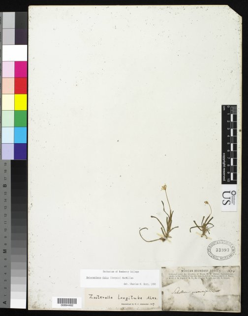 http://collections.mnh.si.edu/services/media.php?env=botany&irn=10281556