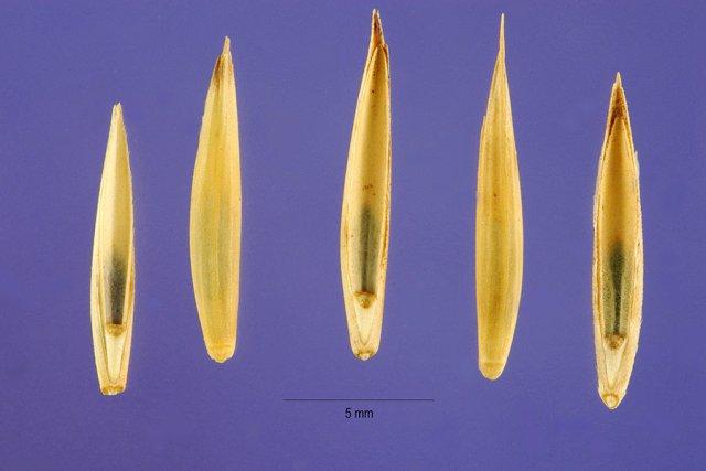http://plants.usda.gov/java/largeImage?imageID=eltrt_001_ahp.tif