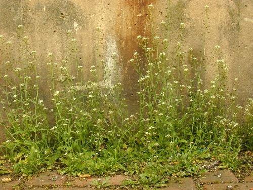 http://www.bioimages.org.uk/vfg/MWSt/Nikon950/2001/01-05/01-05-11/01E11B_6.jpg
