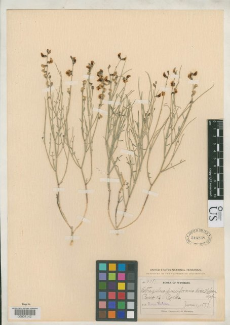 http://collections.mnh.si.edu/services/media.php?env=botany&irn=10099142