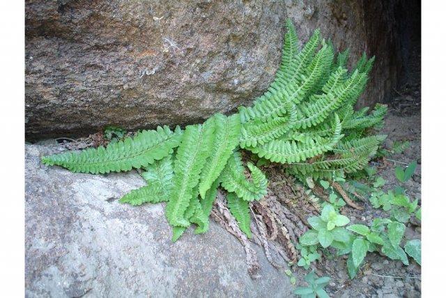 http://plants.usda.gov/gallery/large/posc5_003_lhp.jpg