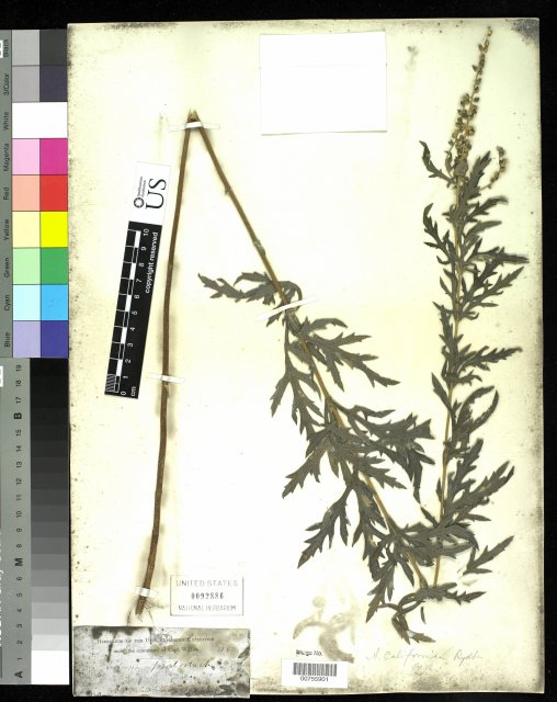 http://collections.mnh.si.edu/services/media.php?env=botany&irn=10215576