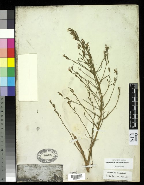 http://collections.mnh.si.edu/search/botany/?irn=2875682