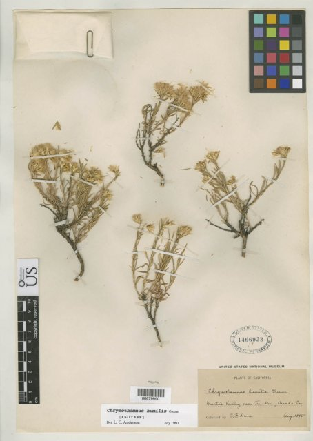 http://collections.mnh.si.edu/search/botany/?irn=10078425