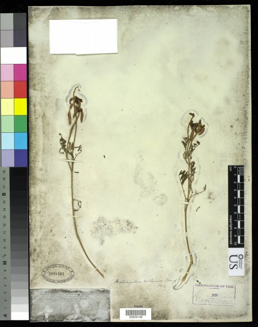 http://collections.mnh.si.edu/services/media.php?env=botany&irn=10211750