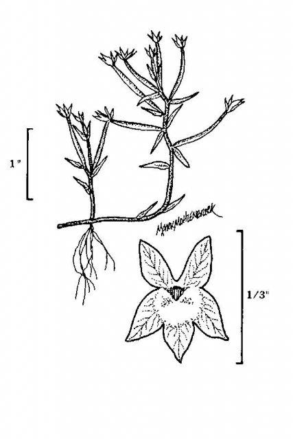 http://plants.usda.gov/java/largeImage?imageID=dola2_001_avd.tif