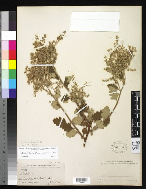 http://collections.mnh.si.edu/services/media.php?env=botany&irn=10282782