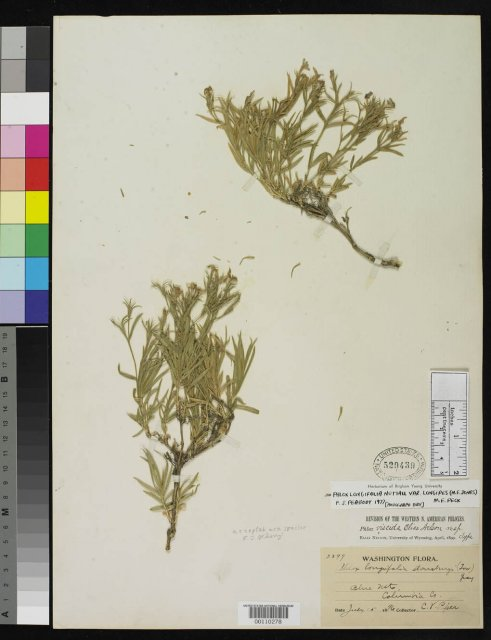 http://collections.mnh.si.edu/services/media.php?env=botany&irn=10104025
