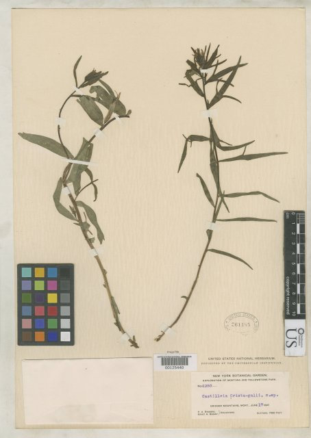 http://collections.mnh.si.edu/search/botany/?irn=2112504